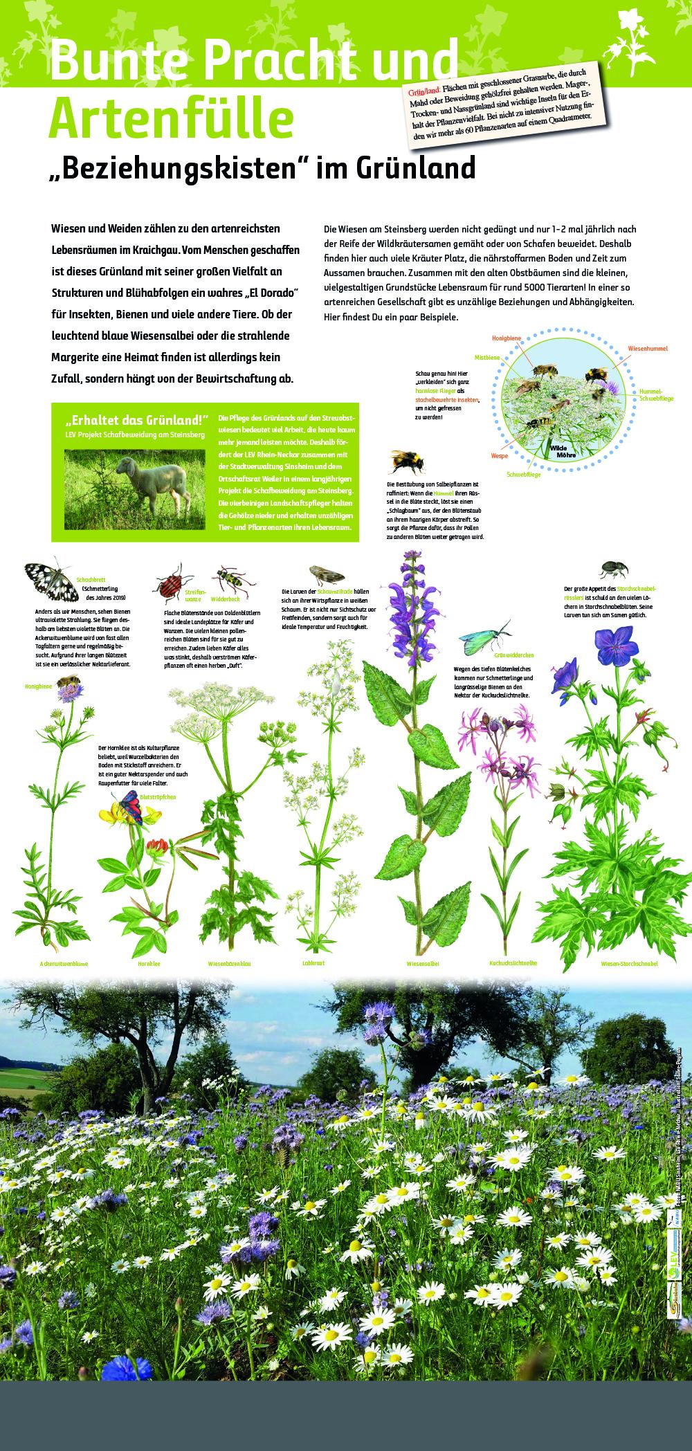 Natur Lebensraum Wiesen und Weiden