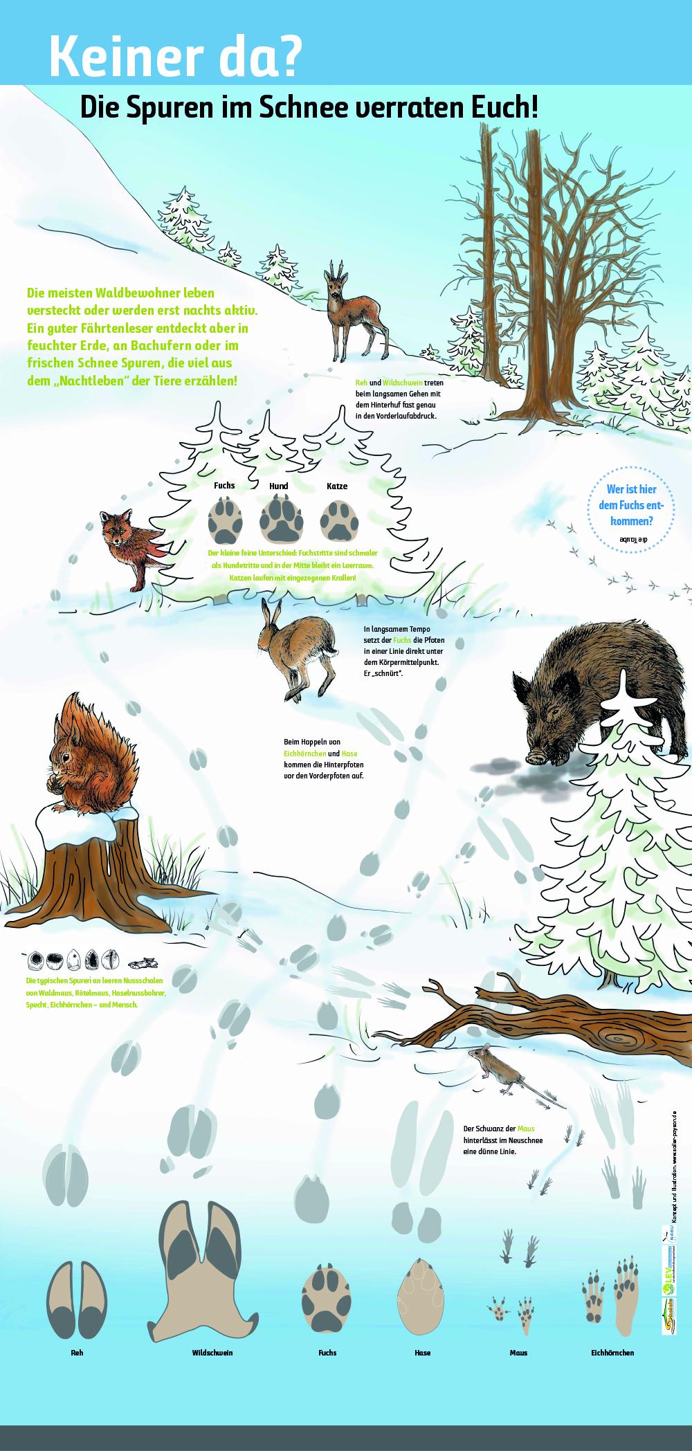 Spuren in Schnee - Nagetiere im Wald