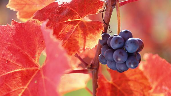 kunterbuntes Herbstfest