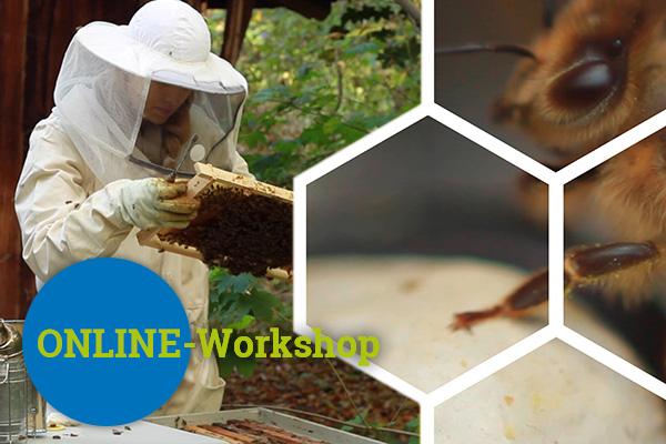 Bienen-Webinar Online-Workshop