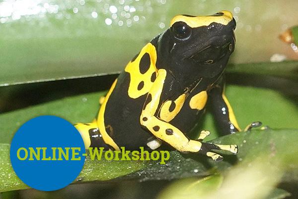 Sekundarstufe 1 und 2 Online-Workshop