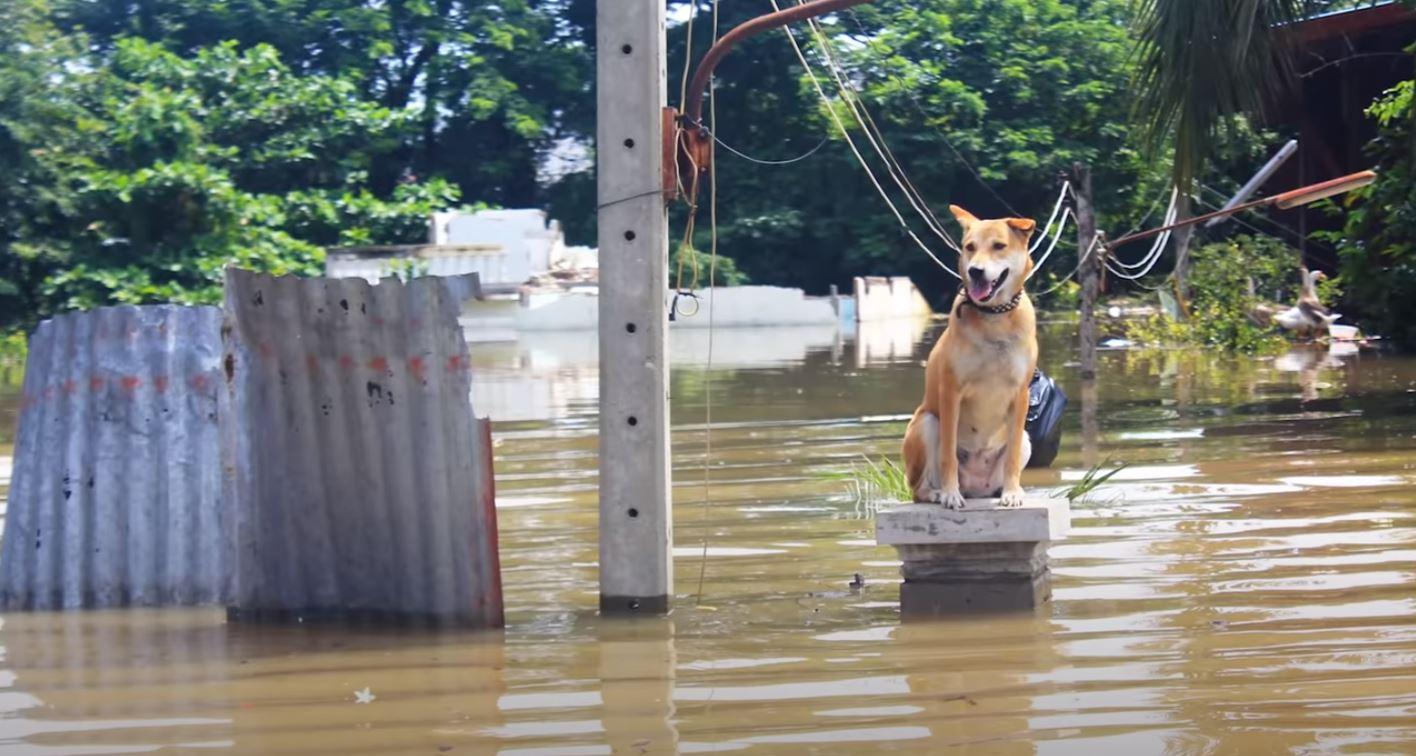 Überschwemmung Hund