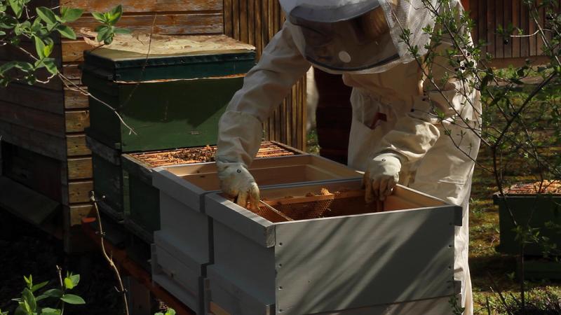Unsere Bienen sind da!