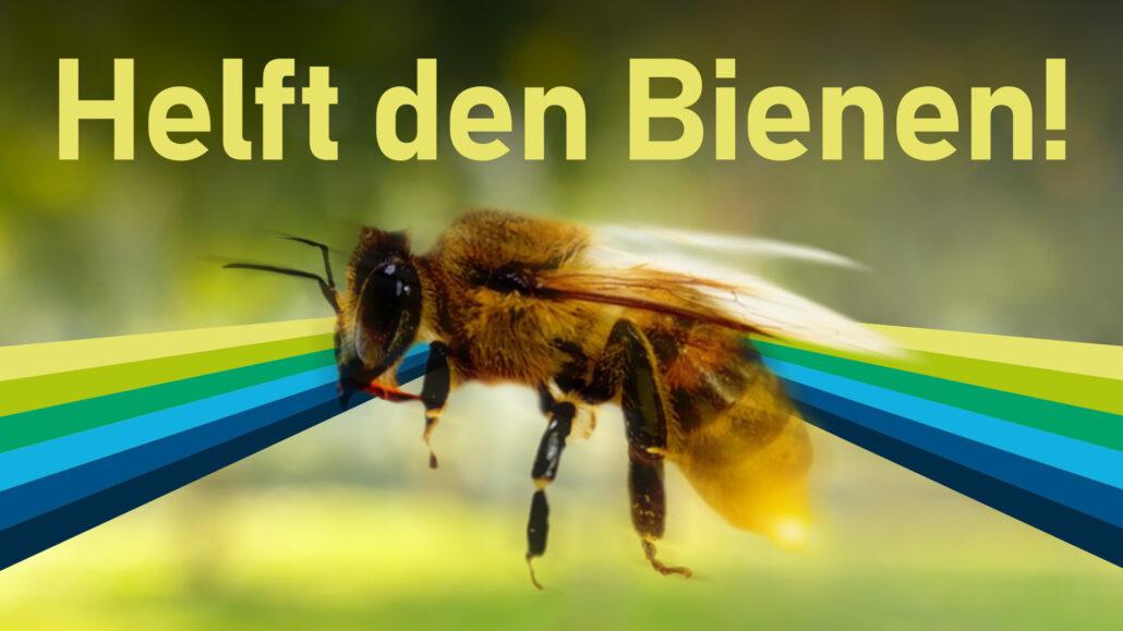 Bienensterben: was können wir tun? | on:spot
