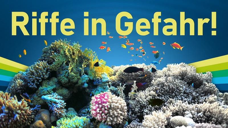 Korallenriffe: Darum sind die Ökosysteme so wichtig
